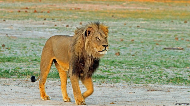 _84507004_cecilthelion3_paulafrench
