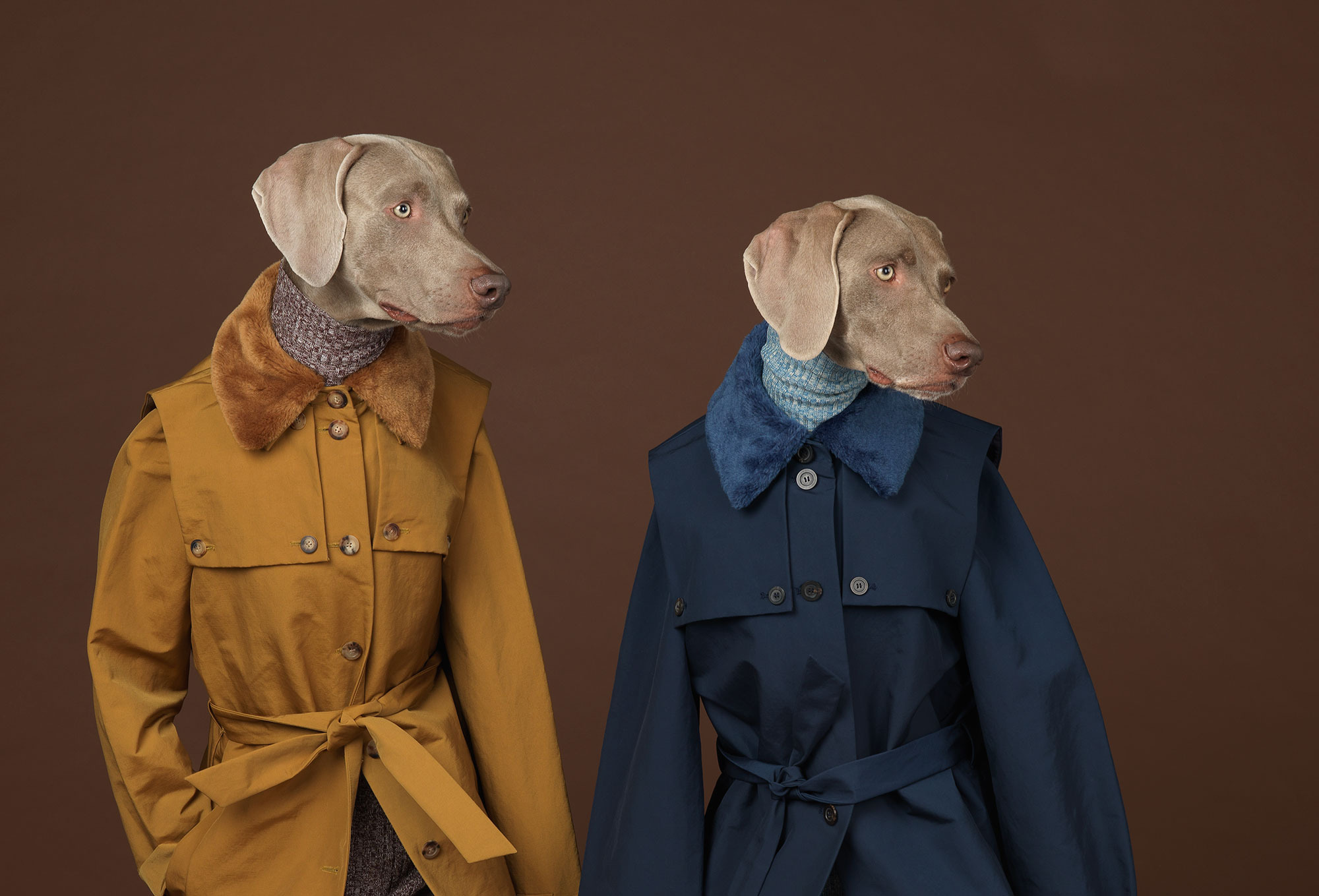 william-wegman-7.nocrop.w1800.h1330.2x